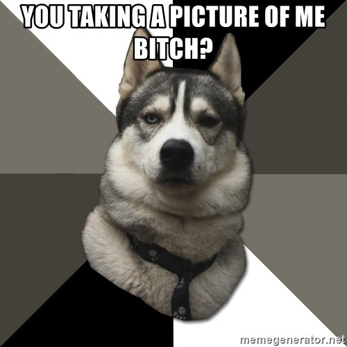 Wise Husky - You taking a picture of me bitch?