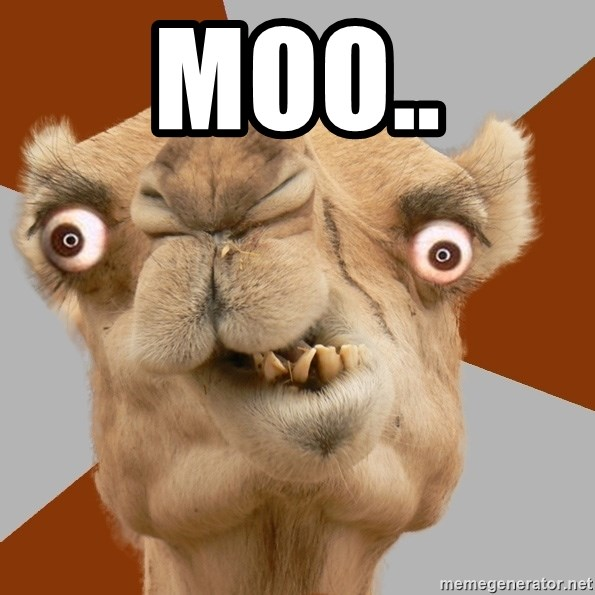 Crazy Camel lol - MOO..