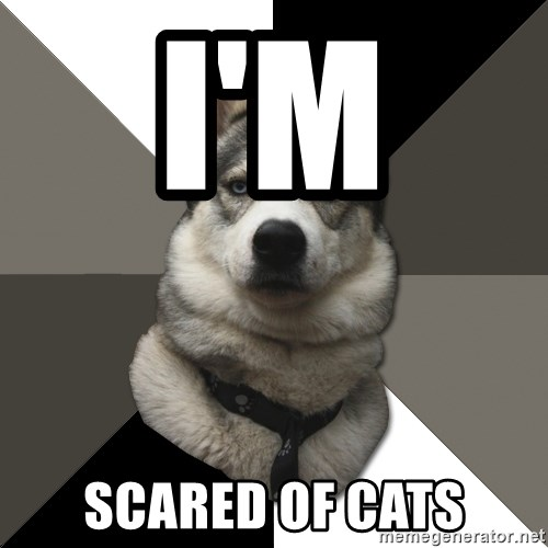 Wise Husky - I'M  SCARED OF CATS