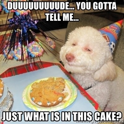 Birthday dog - Duuuuuuuuude... You gotta tell me... Just what is in this cake?