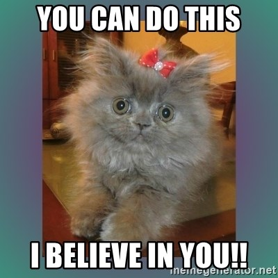 cute cat - You can do this i believe in you!!