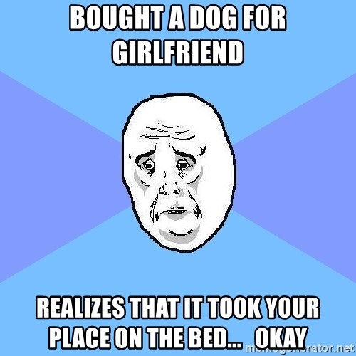 Okay Guy - Bought a dog for girlfriend realizes that it took your place on the bed...   okay