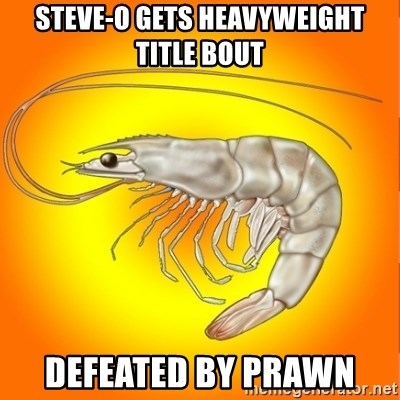 Socially awkward shrimp - steve-o gets heavyweight  title bout defeated by prawn