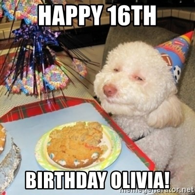 Birthday dog - Happy 16th Birthday Olivia!