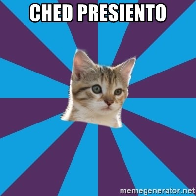 Autistic Kitten - ched presiento