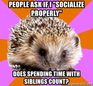 "Homeschooled Hedgehog - People ask if I ""socialize properly"" Does spending time with siblings count?"