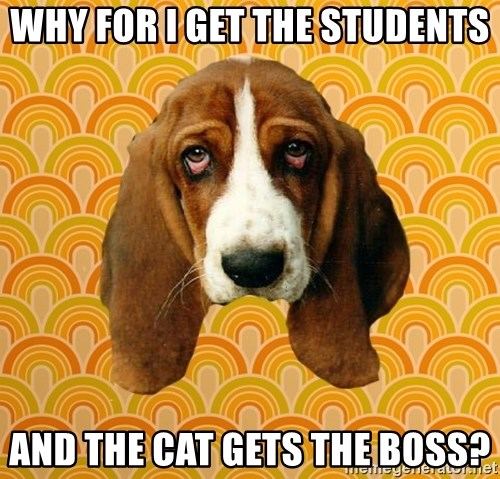 SAD DOG - Why for I get the students And the cat gets the boss?
