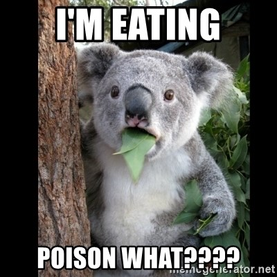 Koala can't believe it - I'm eating poison what????