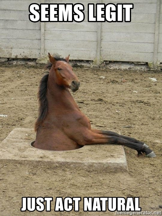 Hole Horse - SEEMS LEGIT JUST ACT NATURAL