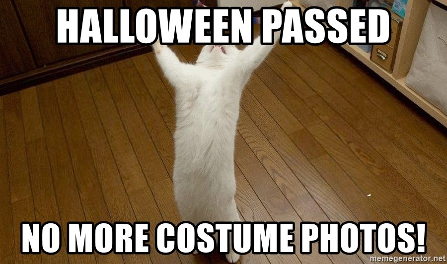 praise the lord cat - Halloween passed No more costume photos!