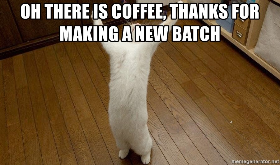 praise the lord cat - oh there is coffee, thanks for making a new batch