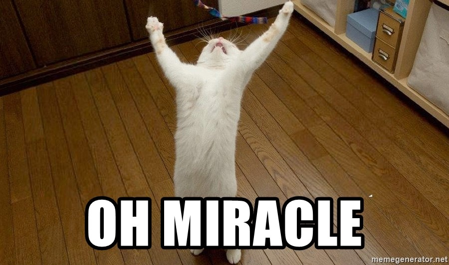 praise the lord cat - oh miracle
