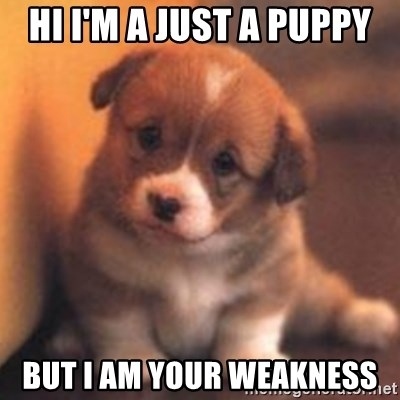 cute puppy - Hi I'm a Just a puPpy But I am your weakness