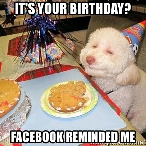 Stoned Birthday Dog - It's Your Birthday? Facebook reminded me