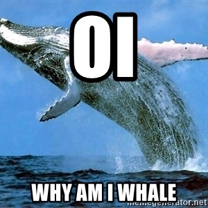 whaleeee - oi why am i whale