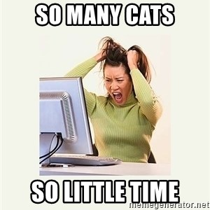 Frustrating Internet User - so many cats so little time