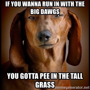 Smughound - if you wanna run in with the big dawgs you gotta pee in the tall grass
