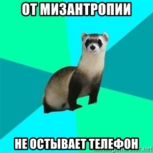 Obvious Question Ferret - От мизантропии не остывает телефон