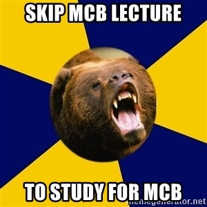 Berkeley Student Bear - Skip mcb lecture to study for mcb