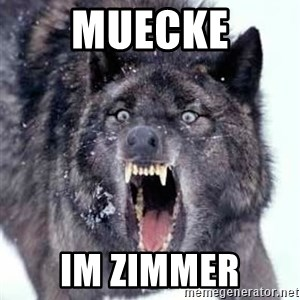 Angry Ass Wolf - muecke im zimmer