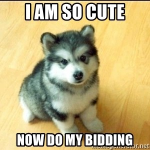 Baby Courage Wolf - I am so cute Now do my bidding