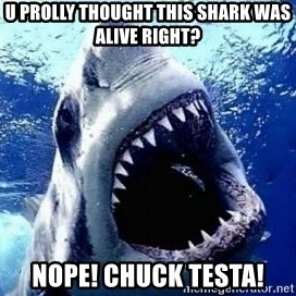 sharkdickman - U prolly thought this shark was alive right? Nope! Chuck Testa!