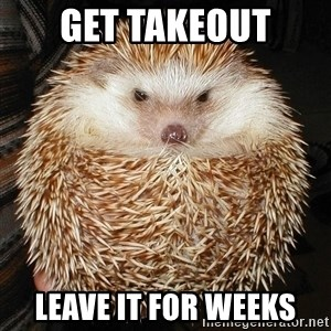 Basement Hedgehog - get takeout leave it for weeks