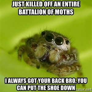 The Spider Bro - Just killed off an entire battalion of moths I always got your back bro, you can put the shoe down