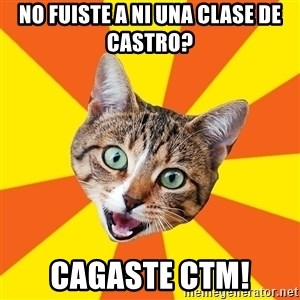 Bad Advice Cat - No fuiste a ni una clase de castro? Cagaste ctm!
