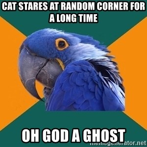 Paranoid Parrot - cat stares at random corner for a long time oh god a ghost