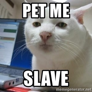 Serious Cat - pet me slave