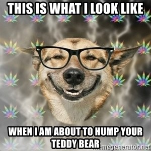 Stoner Nerd - THIS IS WHAT I LOOK LIKE WHEN I AM ABOUT TO HUMP YOUR TEDDY BEAR