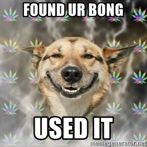 Stoner Dog - found ur bong used it