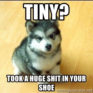 Baby Courage Wolf - Tiny? Took a huge shit in your shoe