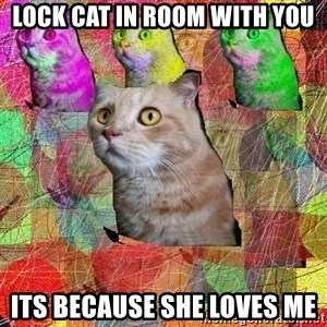 A Cat - Lock cat in room with you Its because she loves me