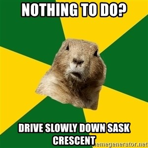 Saskatoon Dog - nothing to do? drive slowly down sask crescent