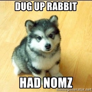 Baby Courage Wolf - dug up rabbit had nomz