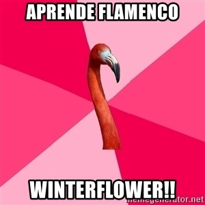 Fanfic Flamingo - APRENDE FLAMENCO WINTERFLOWER!!
