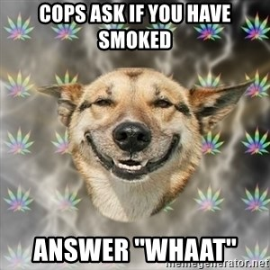 Stoner Dog - cops ask if you have smoked answer ''whaat''