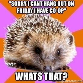 """Homeschooled Hedgehog - """"sorry I CANT hang out on friday i have co-op"""" whats that?"""