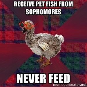 DP Dodo Bird - receive pet fish from sophomores never feed