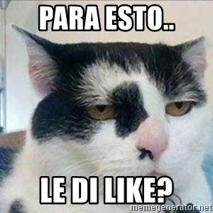 Serious Cat - Para esto.. le di LIKE?