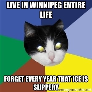 Winnipeg Cat - Live in Winnipeg entire life forget every year that ice is slippery