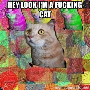 A Cat - hey look i'm a fucking cat