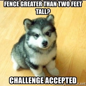 Baby Courage Wolf - Fence Greater than two feet tall? Challenge accepted