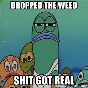 Serious Fish Spongebob - dropped the weed Shit got real