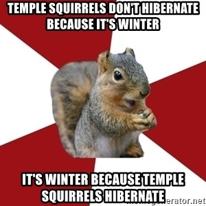 Temple Squirrel - Temple squirrels don't hibernate because it's winter it's winter because temple squirrels hibernate