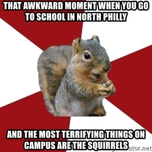 Temple Squirrel - That awkward moment when you go to school in north philly and the most terrifying things on campus are the squirrels