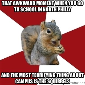 Temple Squirrel - That awkward moment when you go to school in north philly And the most terrifying thing about campus is the squirrels