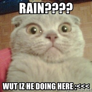 GEEZUS cat - Rain????  wUT iZ he doing here :<<<